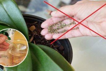 Мощный витаминный комплекс для орхидей!