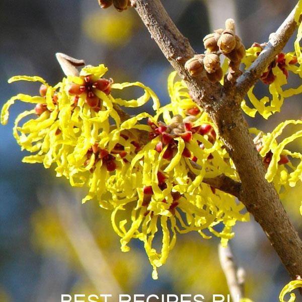 Натуральные средства от запаха пота 5