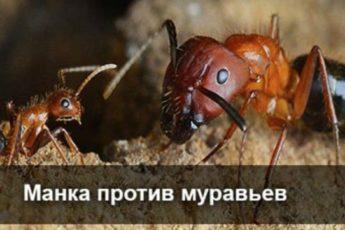 Манка против муравьев 1