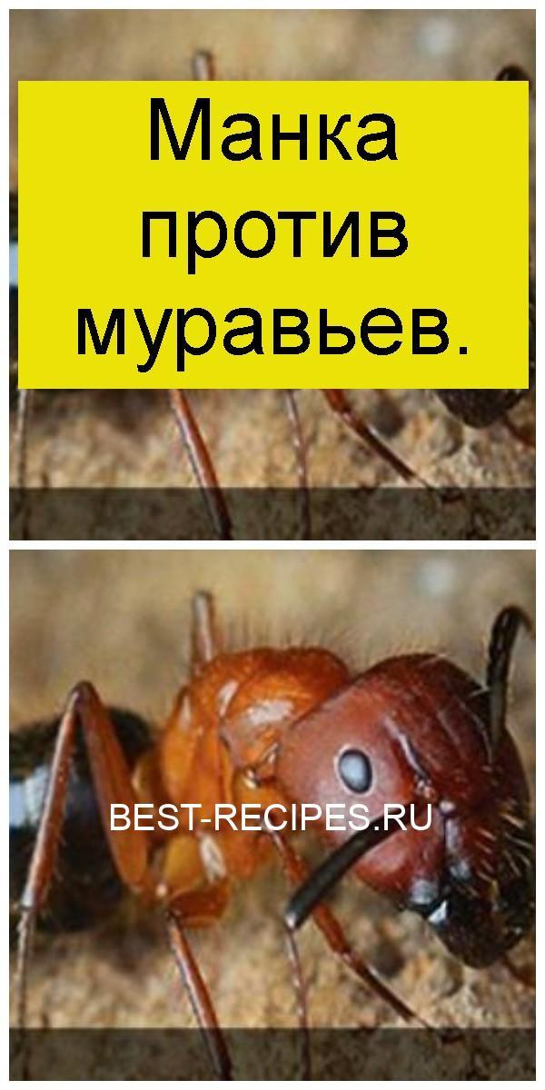 Манка против муравьев 4