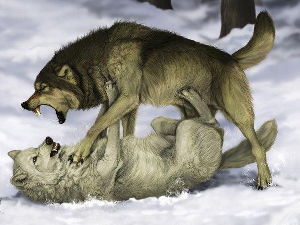 Мудрая притча про двух волков. Читается за 20 секунд, а запоминается на всю жизнь 1