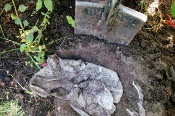 По примеру французских фермеров закопала в огороде тряпку, чтобы определить плодородие почвы. Недавно выкопала 1