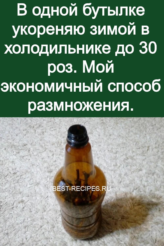 В одной бутылке укореняю зимой в холодильнике до 30 роз. Мой экономичный способ размножения 3